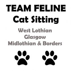 Team Feline Cat Sitting